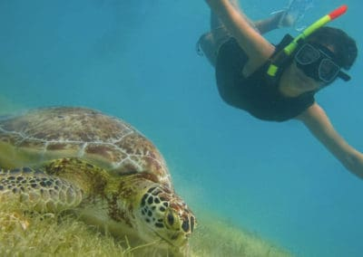 kid-diving-with-turtles
