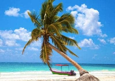 playa-paraiso-palmera