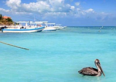 puerto-morelos-pelicano