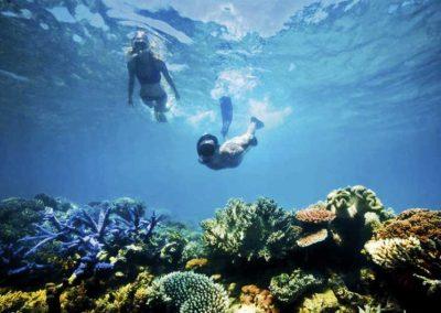 Snorkel 2 Reefs