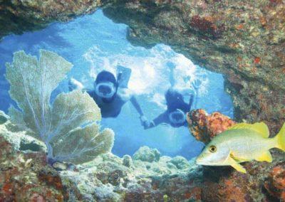 Snorkel 3 Reefs