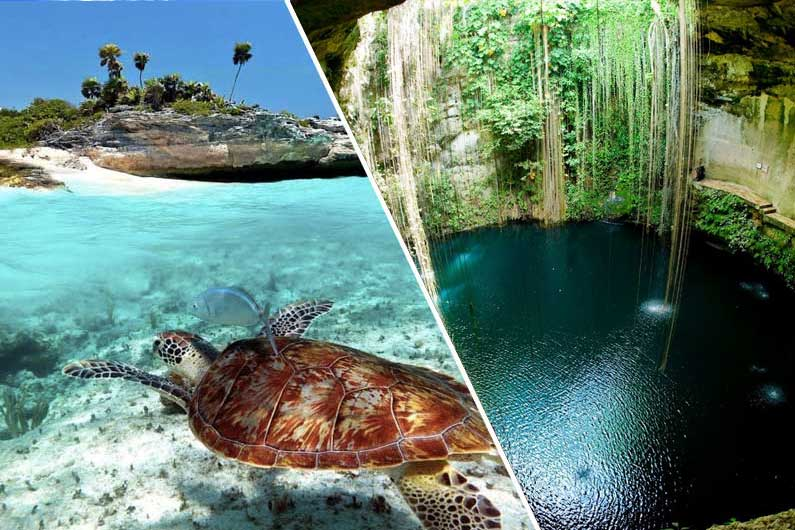 Turtles and Cenotes